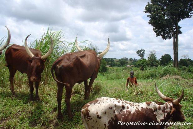 Uganda, in drum spre savana