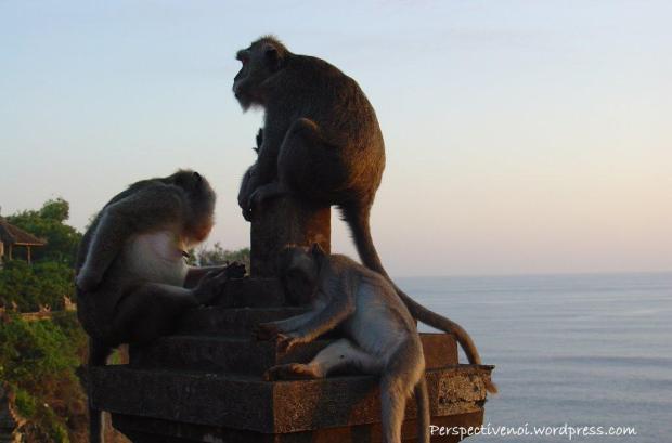 Bali - templul cu maimute