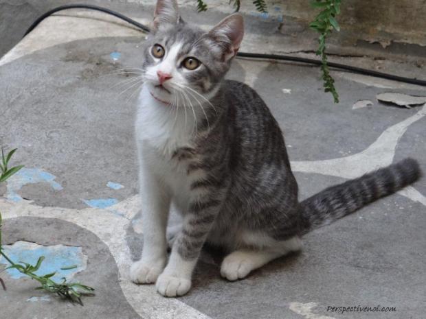 Atena - Pisic